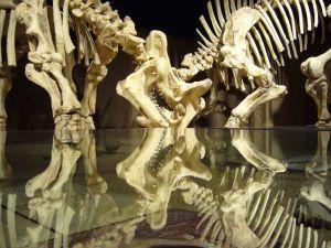 dinosaurs-skeletons-586078-m